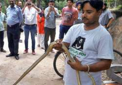 The rescued snake with a Wildlife SOS