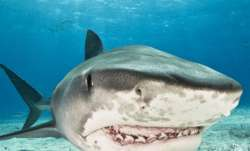 Hawaiian man survives shark attack after being mauled by