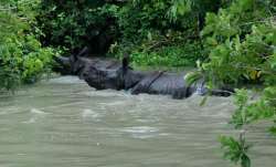 90 percent of Kaziranga National Park submerged;