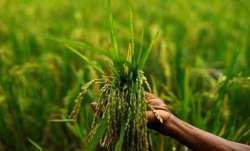 40 villages in Rajasthan suffer crop damage due to