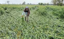 Govt report recommends Rs 2,904 cr compensation for Marathwada farmers