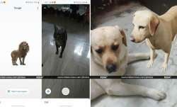 google 3d animals, google 3d animals tiger, google 3d animals panda, google 3d animals dog, google 3