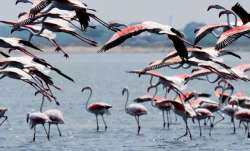 odisha birds