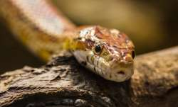 Thane: Man dies after being bitten by snake while